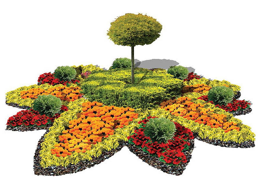 Three types of plants for flower beds