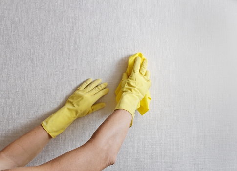How to remove mold from the wallpaper