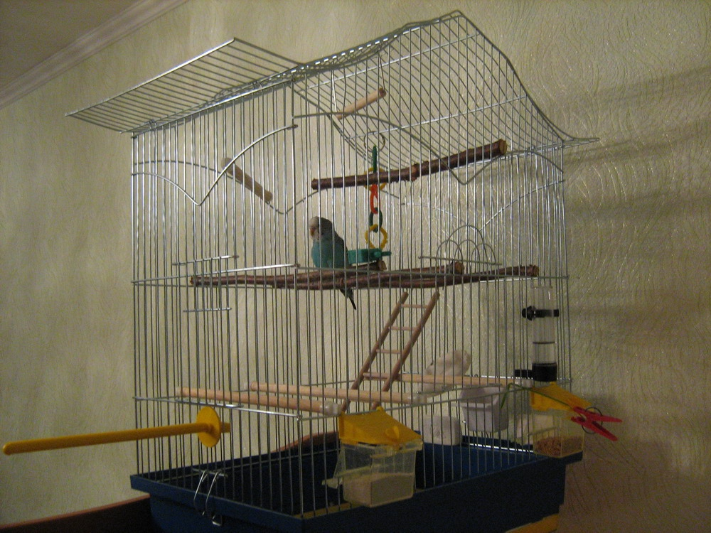 Cage for a parrot