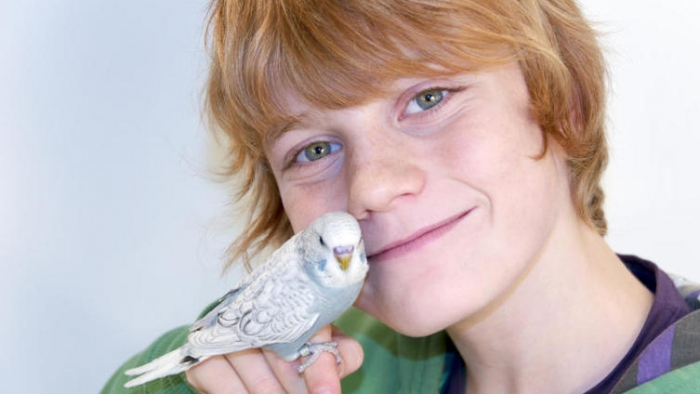 Boy and wavy parrot