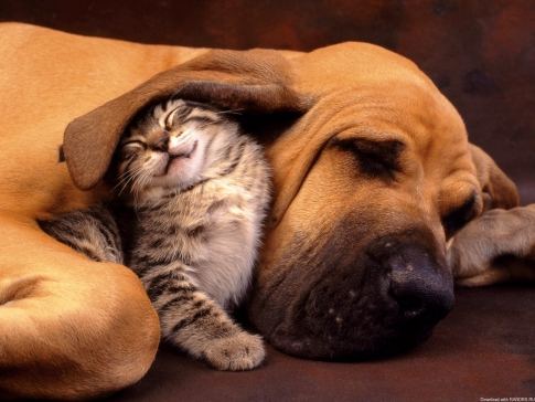 Keeping cats and dogs