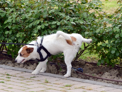 Sanitary standards for animals