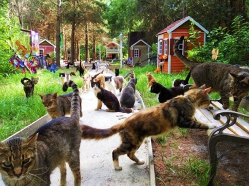 Many cats on the alley