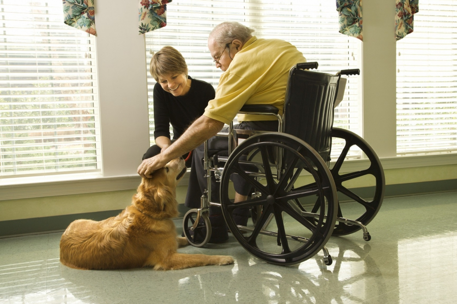 Disabled person and dog