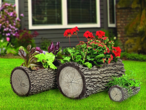 Flowers planted in a log