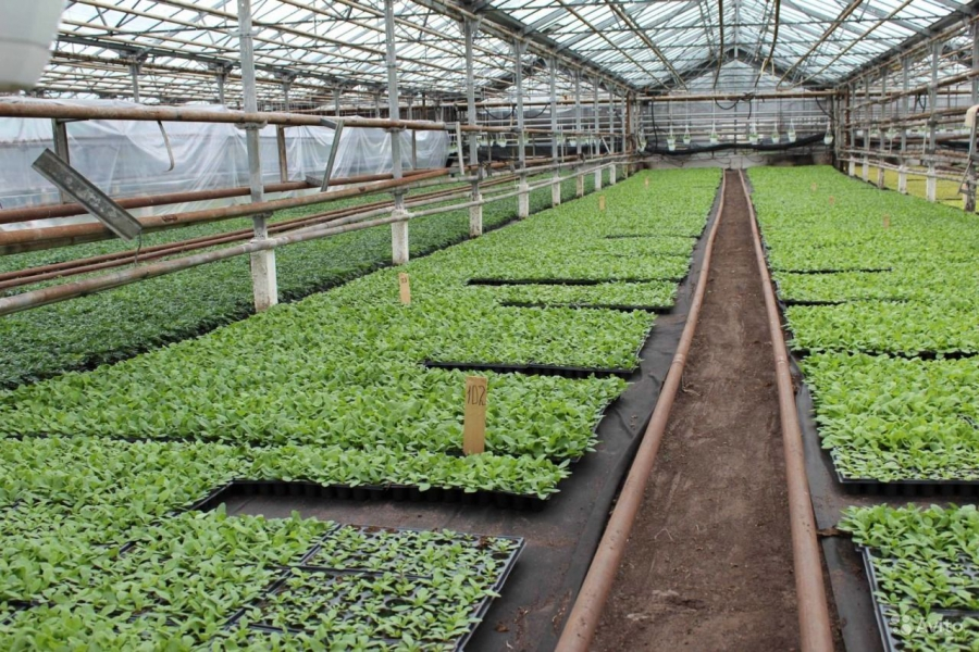 Greenhouse with seedlings