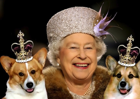 Dogs of the English Queen