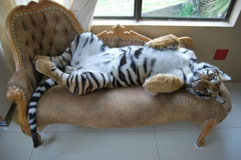 Tiger sprawled on the couch