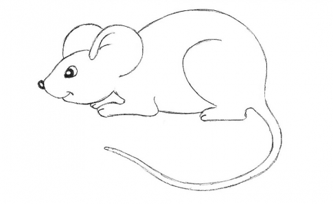 How to draw a mouse_5