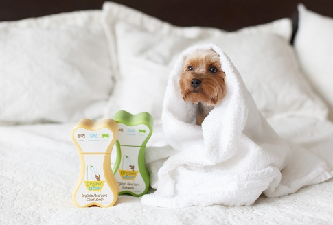 Shampoos for dogs