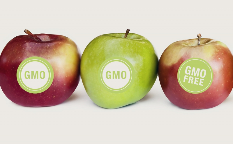 Genetically Modified Apples