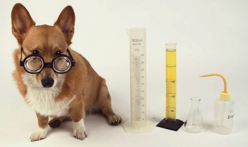 Dog in glasses with cones